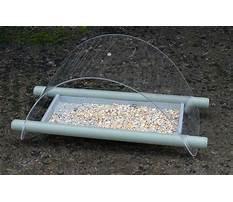 Are black birds ground feeders Plan