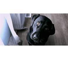 Awesome dawgs dog training llc.aspx Plan