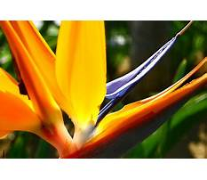 Bamboo bench tops aspx file Plan