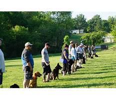 Best dog training schools in texas.aspx Plan