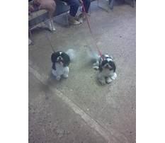 Best friend dog training littlestown pa.aspx Plan