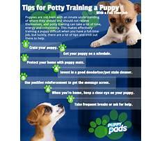 Best way to potty train dog.aspx Plan
