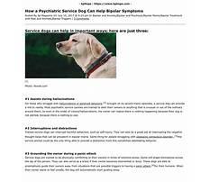 Bipolar service dog training.aspx Plan