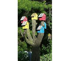 Bird house for sale minnesota Plan
