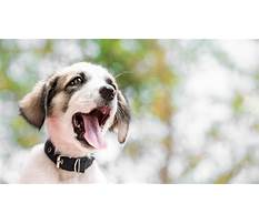 Biting in puppies Plan