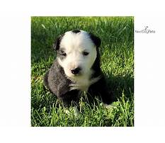 Black dog training.aspx Plan