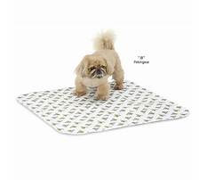 Build dog house.aspx Plan