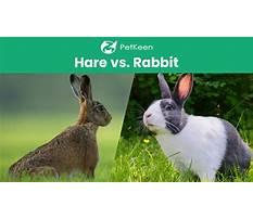 Bunny and rabbits difference Plan