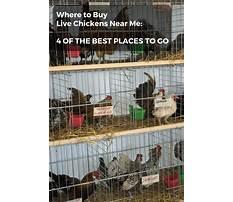 Buy chicken near me Plan