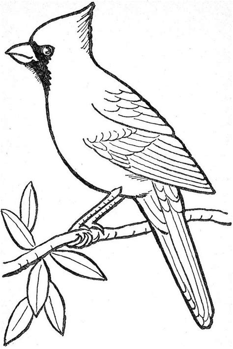 HD wallpapers coloring pages of bird feeders Page 2