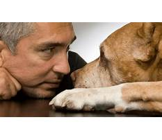 Cesar dog trainer Plan