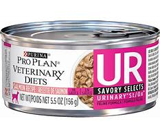 Chewy cat urinary diet Plan