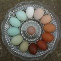 Chicken Egg Shell Colors