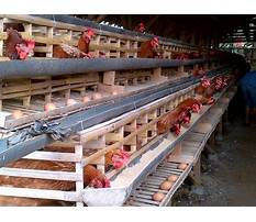 Chicken cages houses in philippines Plan