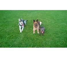 Cloverdale dog training.aspx Plan