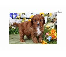Crate toilet training for dogs.aspx Plan