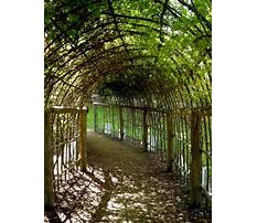Creative grape arbors pergola Plan