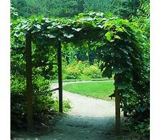 Creative grape arbors vines Plan