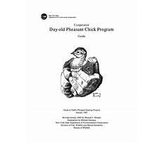 Day old pheasant chicks Plan