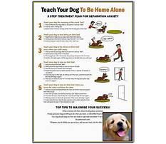 Dog behaviour training wollongong.aspx Plan