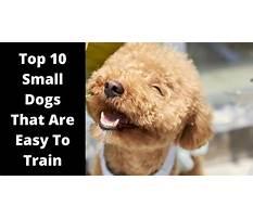 Dog breeds that train easy Plan