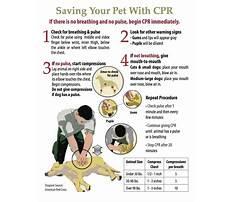Dog cpr training Plan