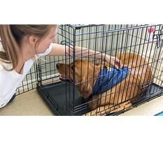 Dog crate training at night.aspx Plan