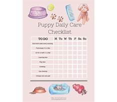 Dog e training Plan