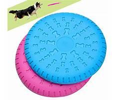 Dog flying disc training.aspx Plan