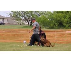 Dog obedience training dfw Plan
