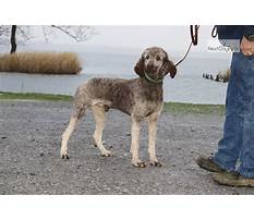 Dog obedience training dyersburg tn Plan