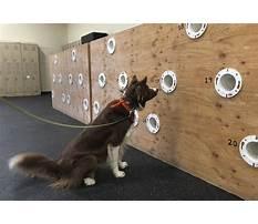 Dog scent training calgary.aspx Plan