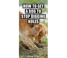 Dog train digging Plan