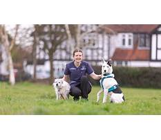 Dog training academy Plan
