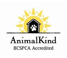 Dog training bc canada Plan