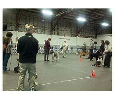 Dog training bc Plan