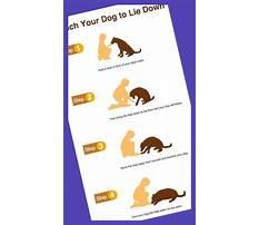 Dog training biting problems Plan