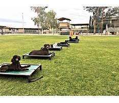 Dog training camp philadelphia Plan