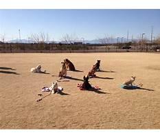 Dog training classes henderson nv Plan