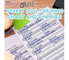 Dog training clothes Plan