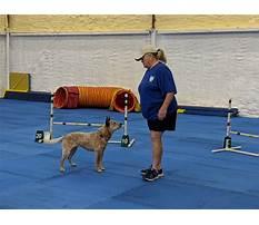 Dog training club of tampa Plan