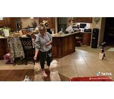 Dog training columbia county oregon Plan