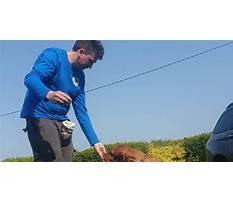 Dog training cork.aspx Plan