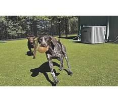 Dog training corvallis.aspx Plan