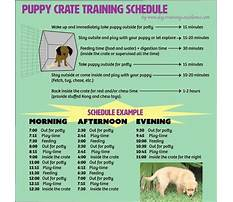 Dog training crate Plan