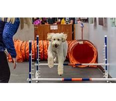 Dog training culver city.aspx Plan