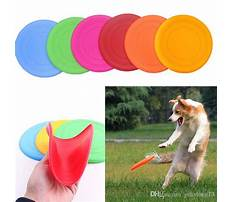Dog training discs Plan