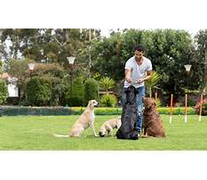Dog training dvd download Plan