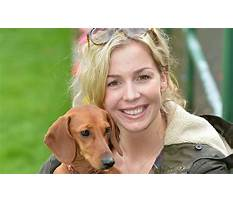 Dog training ebbw vale Plan