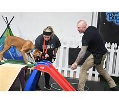 Dog training ebensburg pa Plan